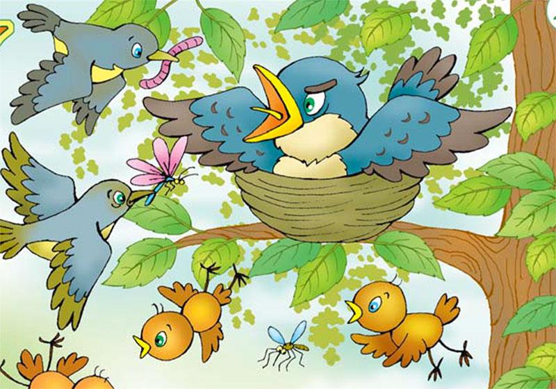 Птенец-разбойник
